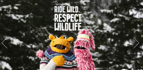 RESPECT-WILDLIFE.png